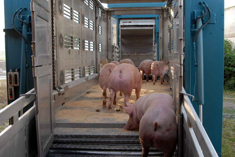 Forderung  um Tiertransportzeiten