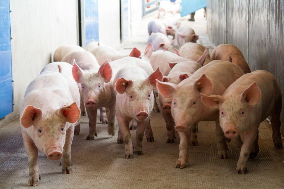 Sommertemperaturen brauchen kreative Lösungen für Tiertransporte