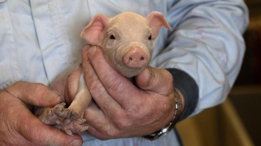 Erneut weniger Antibiotika an Tierärzte abgegeben