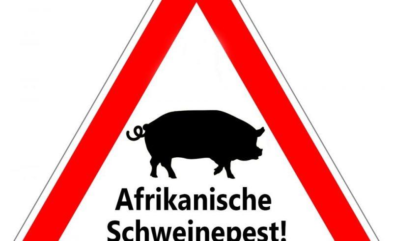 Afrikanische Schweinepest in Haustierbestand in Polen entdeckt