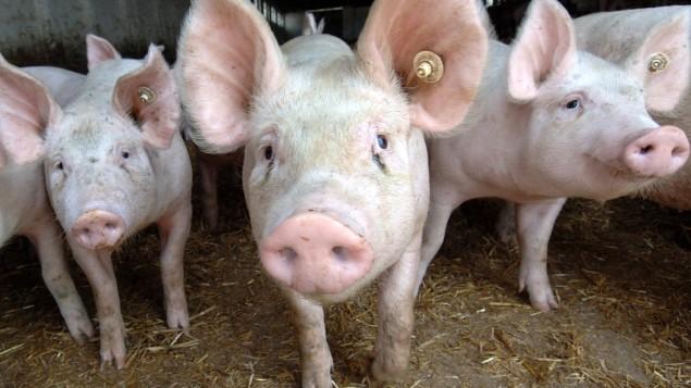 Weiter Fortschritte bei Antibiotikaminimierung