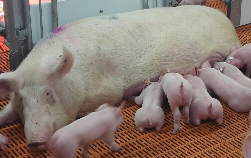 Klöckner: Umbau der Nutztierhaltung möglich