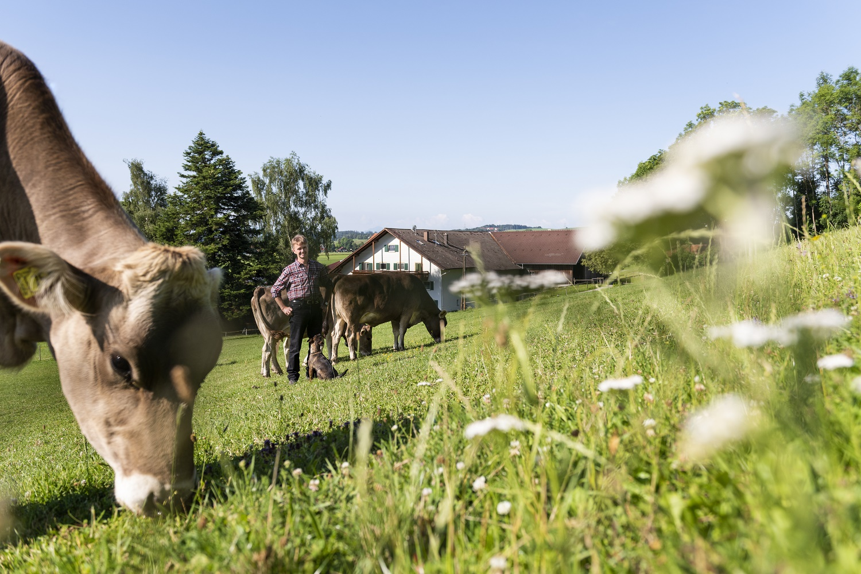 Ökologische Tierhaltung: Zahl der Höfe stark gestiegen