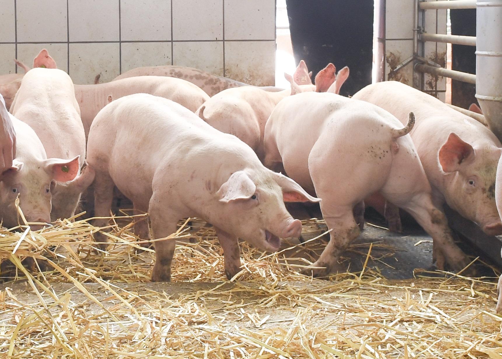 Wissenssammlung für Bau tierwohlgerechter Ställe online