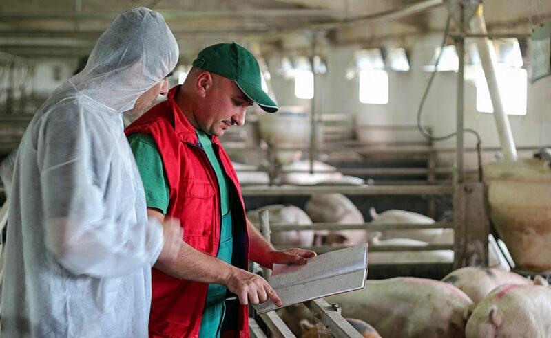 Neue Kennzahlen zum Antibiotikaeinsatz bei Schweinen
